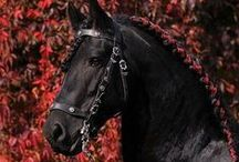 Hairstyles Horses