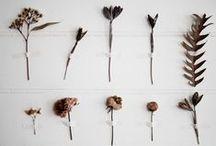 COUCH ♥ Nature / DIY-Ideen für den Herbst – mit Laub, Nüssen, Ähren und allem, was die Natur jetzt bietet