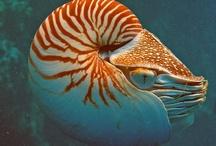 Aquatic invertebrates