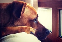 MOMENTOS PERRUNOS / Momentos especiales de estos locos maravillosos que son los perros.