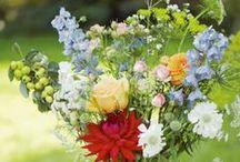 Fiore / Perfetta creazione della natura - aromatico, delicato, bello, fragile, colorato - per godere i sensi.