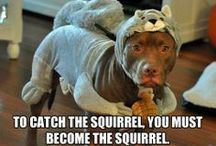 Cute funny animal pics / The most adorable, funny pet pics you'll ever see!