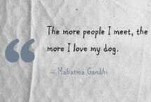 Quotes about dogs / This board is all about the dogs, and the beautifuléfunny quotes dedicated to them