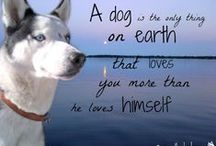 My Graphic Creations / This board is filled with different graphic creations, inspired by my Siberian Huskies. Quotes, photo shop, and sheer beauty! Hope you enjoy!