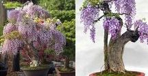 Gardening / Edible flowers, beautiful plants, nature, beutly