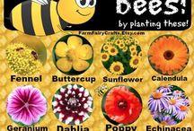 Bees & Birds