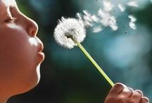 Make A Wish / by Marissa LaFontaine