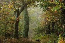 Little Red Riding Hood: miljöer / Rödluvan: hemma, på ängen, i skogen Mamma: inomhus, utomhus, i trädgården Vargen: i ljusan dag, på natten, på vintern