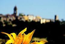 """Monterubbiano / Monterubbiano è disposto sul versante nord della Valle del fiume Aso, a 463 metri s.l.m., ad una distanza di sei chilometri dal mare, in provincia di Fermo. Dal 2002 è insignito del prestigioso marchio di qualità turistico ambientale del Touring Club Italiano: """"Bandiera arancione""""."""