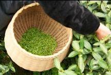 Pensée Bio / Nous vous emportons jusqu'en Chine pour y découvrir nos jardins de thé bio