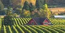 Lover's Intuition inspiration / settings and inspiration for romantic suspense novel, vineyards are worldwide