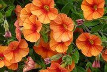 MY BLOG - Gardening / Mein Blog - mein Garten