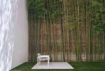 A World of Bamboo