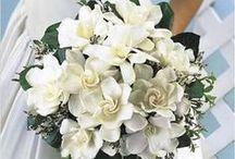 Gardenia Inspired