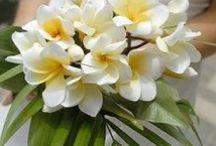 Wedding HAWAIIAN/TROPICAL / by White Satin Wedding Show