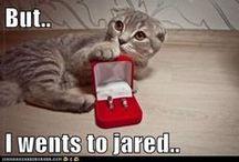 Pet Themed jewelry