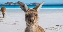 TRAVEL: AUSTRALIA   Australien / Travel to Australia - Tips and Stories plus Itineraries for Down Under    Reisen in und nach Australien - Tipps, Sehenswürdigkeiten, Hotels, Roadtrips, Ideen und Unterkünfte