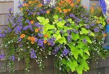 Garden Ideas/My Brown Thumb / by Debbie Wood