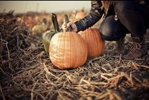 fall. / by Alba C