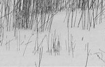Sugar Creek Preserve / Forest Preserve District of Will County; Joliet, Illinois