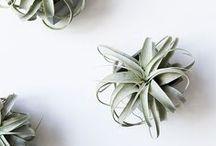 Succulents / by H  A  M