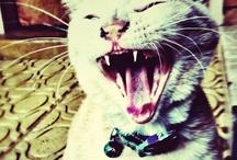Feline frenzie
