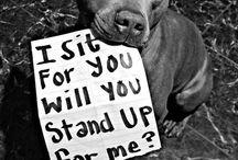 Animaux / Parce qu'un animal a le droit d'être considéré comme un être vivant, et non comme un vulgaire meuble...