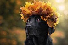 gaby b herfstseizoen /autumn / knus de herst door /AUTUMN