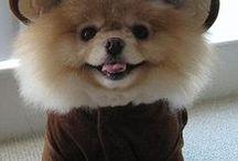 gaby b cute dogs / leuke hondjes / gaby b cute dogs / leuke hondjes