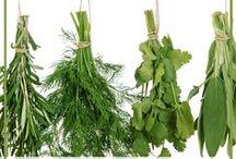 Healthy Herbs & Veggies / Health benefits of various plants