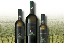 our wines: WHITES