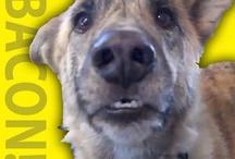 Animal Videos / Animal videos that make us smile!