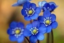 *blue.ブルー