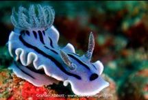 Sea Slugs / :-)