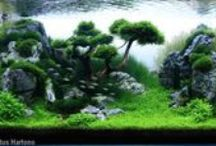 Aquariums and aquascapes