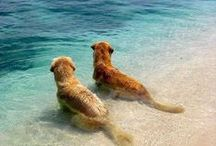 ♥Dogs and Dogs♥ / Dogs :D ♥