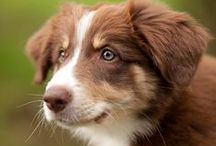 Beautiful dog photos / Dog photos ♥