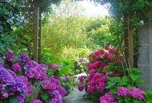 Μονοπάτια στον κήπο