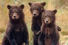 medvéim