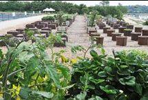 Une ferme en ville / Arriver à cultiver des fruits et légumes sur un terrain pollué. Tel est le défi relevé, à l'initiative de son président Xavier Laureau, par la grappe d'entreprises du Vivant et la Ville, soutenue depuis sa création par François de Mazières et Versailles Grand Parc : http://bit.ly/1lV6ZZk