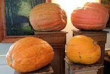Zucche Pumpkins Citrouille / Benvenuti nel nostro mondo pieno di #zucche!