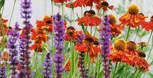 Idées jardin, inspiration et associations / Découvrez toutes nos idées d'associations pour composer de jolies scènes dans vos massifs
