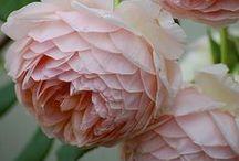 Macrophotographie de plantes et de fleurs / Parce-que, parfois, on ne remarque la beauté d'une plante ou d'une fleur qu'à travers l'objectif d'un appareil macro ...  Nous vous invitons à partager ici vos clichés macro en rapport avec le jardin, les plantes et les fleurs. Il vous suffit de laisser un commentaire ou de nous envoyer un email avec votre pseudo Pinterest.