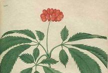 Medicinal Herbs / by e l i z a b e t h : : : D'A N G E L O  : : : a r t