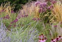 Inspirations Jardin / Des planches d'inspiration pour le jardin composées par l'équipe de Promesse de Fleurs, des sélections de végétaux rares, beaux et tendance !