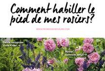 Solutions pour le jardin / Que planter au pied de mes rosiers? Comment constituer des massifs sans entretien? Cultiver les arbustes d'ombre? ... Vos questions, nos réponses!
