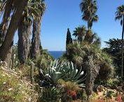 The Marimurtra Botanical Garden