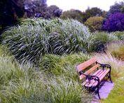 Dublin Botanic Garden / Ornamental grass garden, plants, grasses, greenhouses, Viking house
