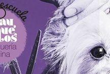 Escuela de peluquería canina en Zaragoza / Cursos 100% prácticos de Peluqueria Canina en Zaragoza haz de tu pasión tu profesión.