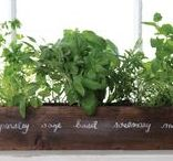 Herb Gardening Ideas to go with your Envirocycle Composter / Inspirational ideas to go with your Envirocycle composter! Visit Envirocycle.com to learn more about The Most Beautiful Composter in the World and buy directly from Envirocycle: https://www.envirocycle.com/product/composter/
